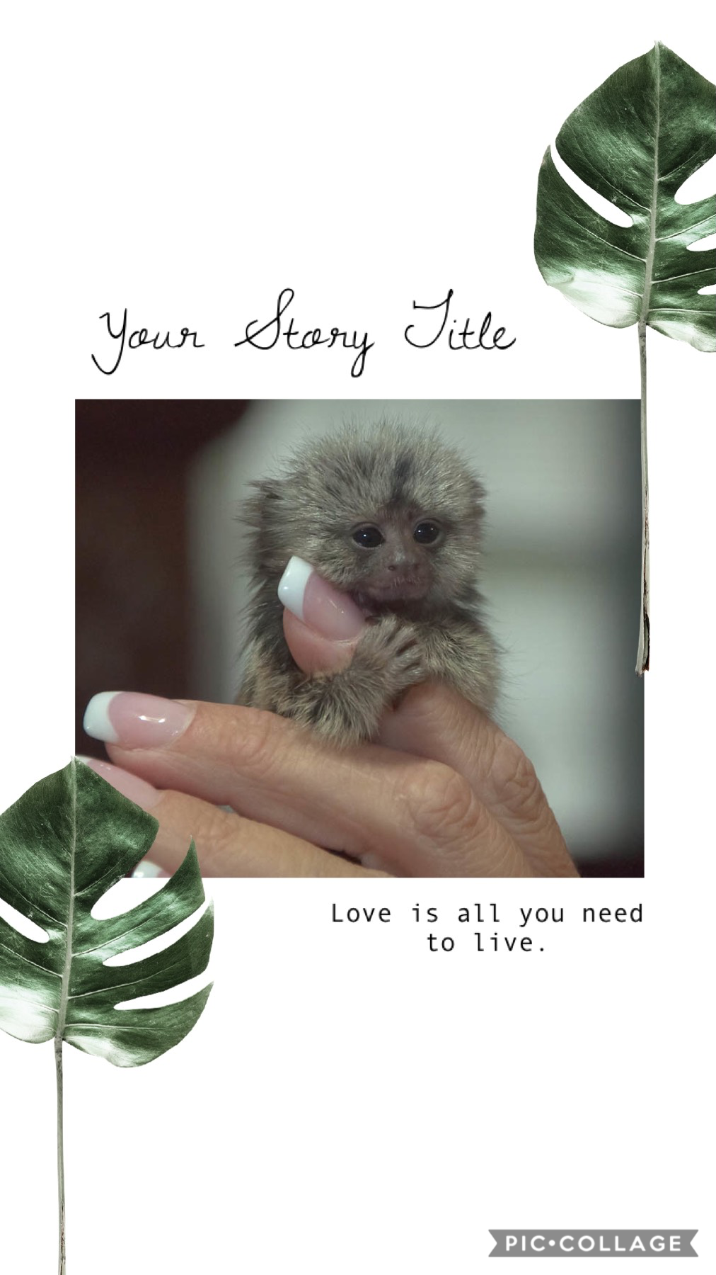 This is a baby Marmoset