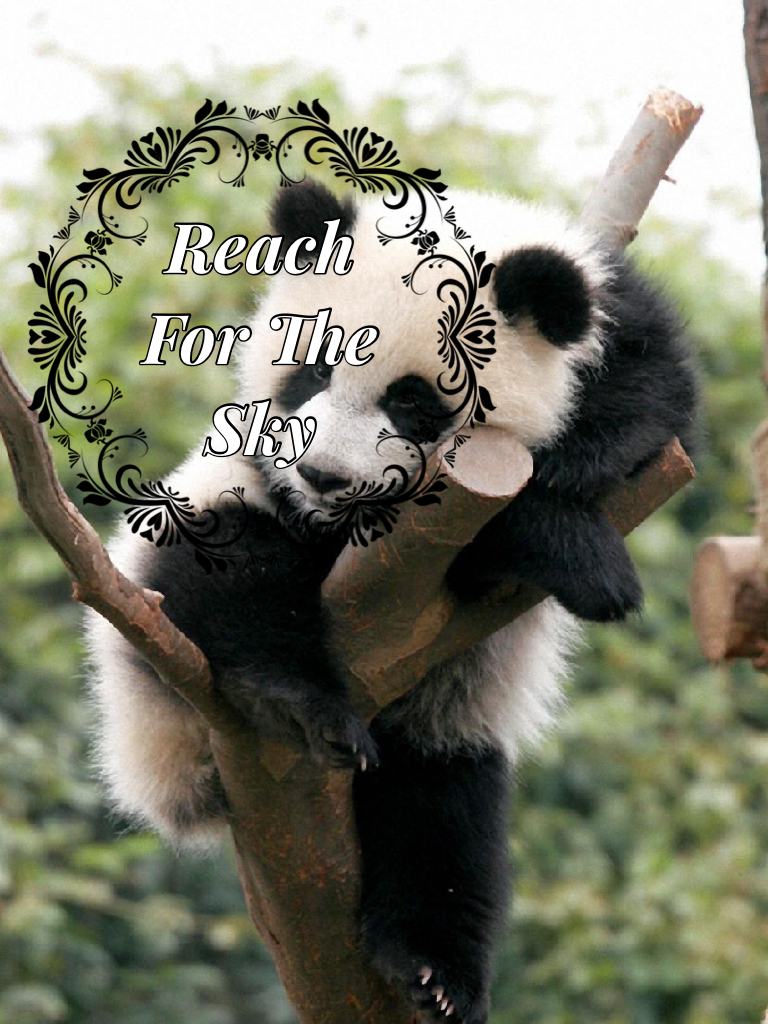 Tap! Tell me in the comments if you like pandas or what your favorite animal is.