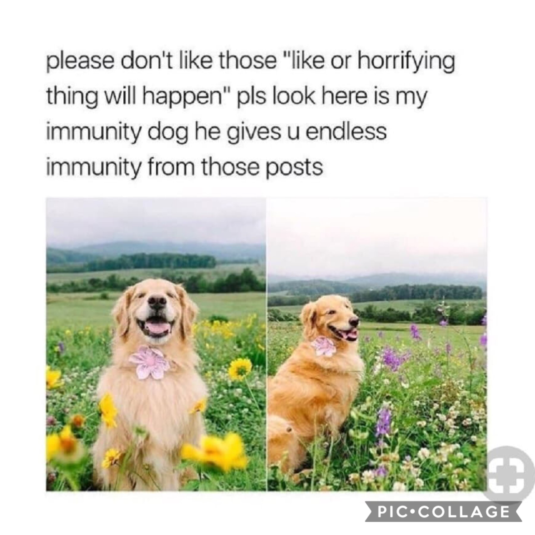 Save me immunity dog😅 My account is such an oxymoron😅😓💗