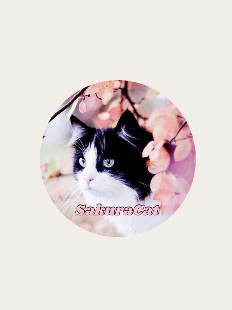 SakuraCat's icon