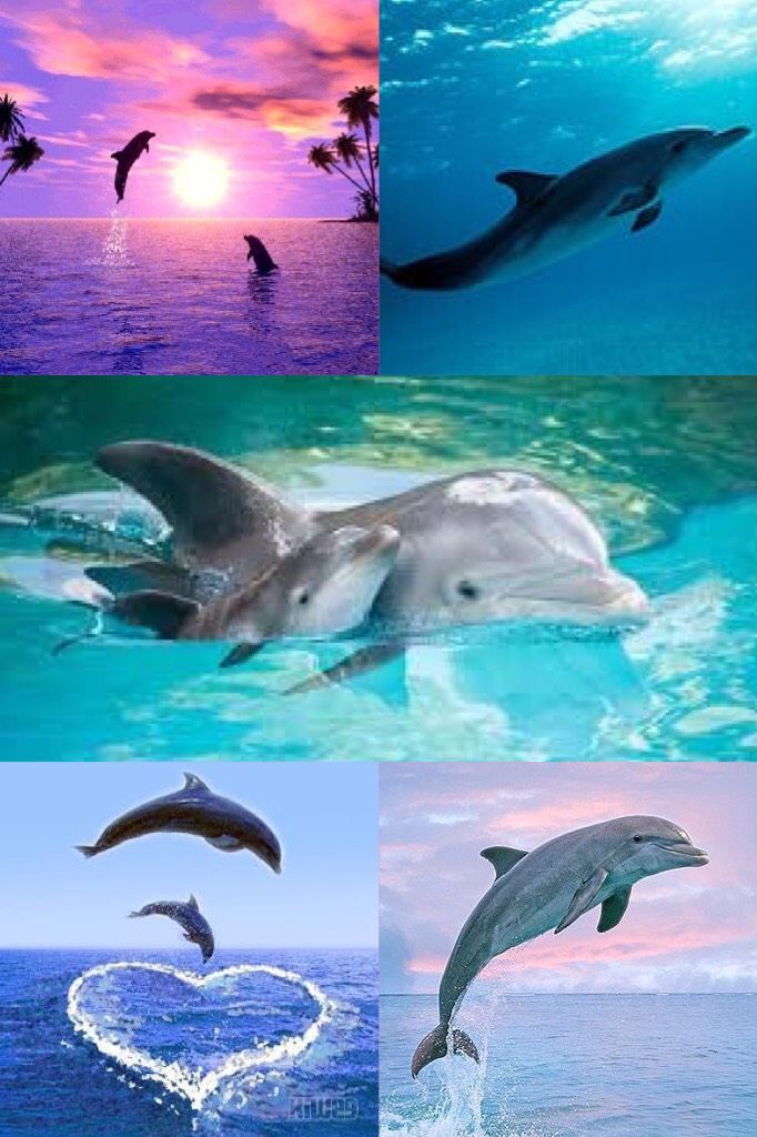 Dolphins are beautiful