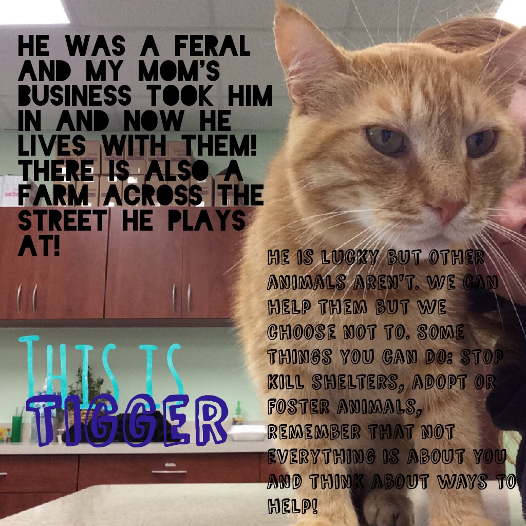 Tigger has been through a lot you guys. Help support sheltered animals in need!