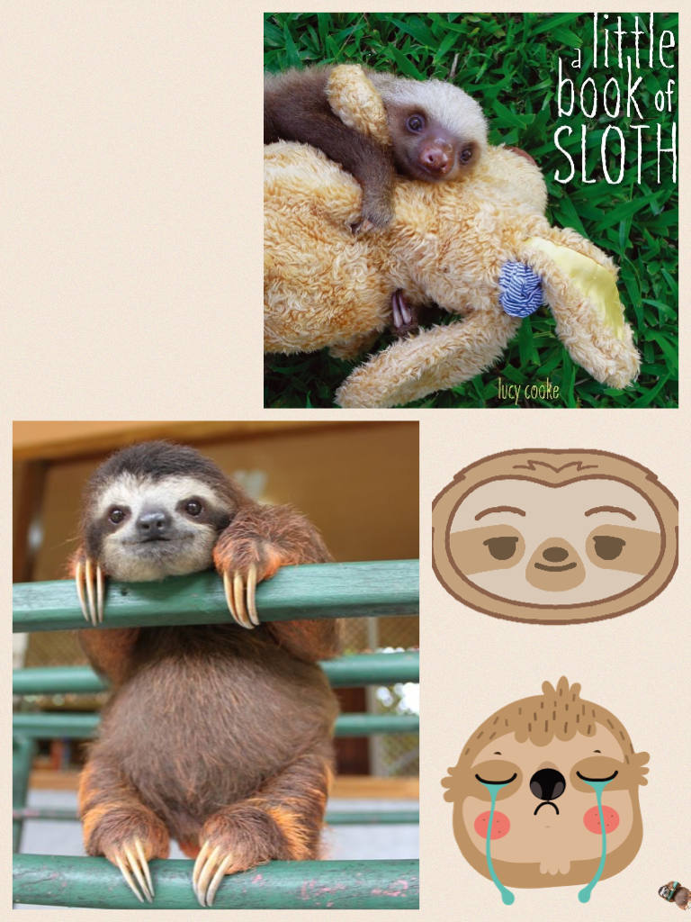 Picture the tiny sloth