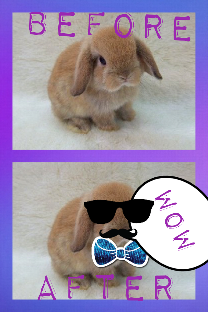 The change of the bunny