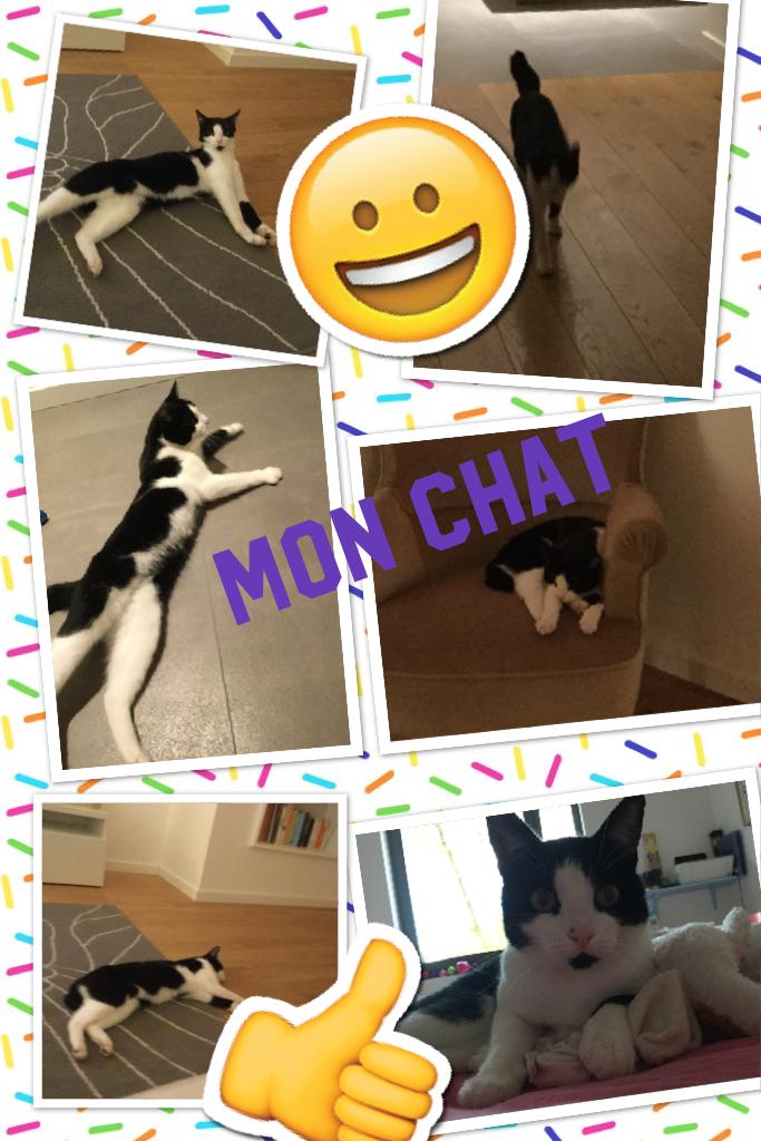 Mon chat Je l'adore 😍😍