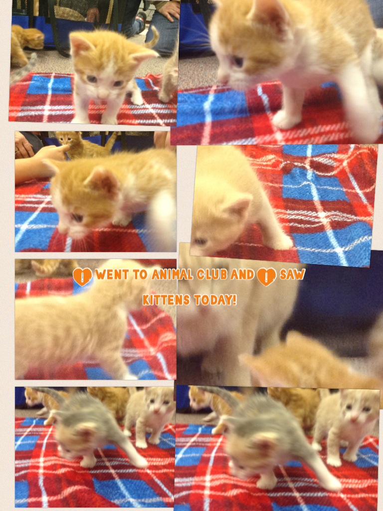 I went to animal club and I saw kittens today!