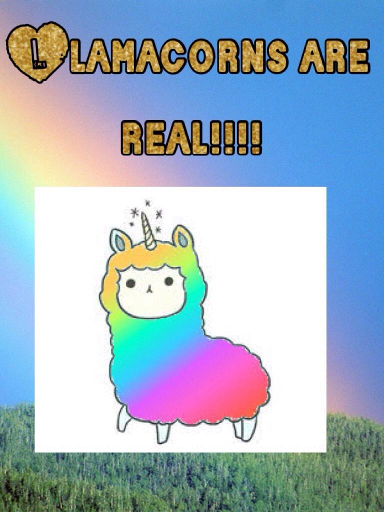 Llamacorns are real!!!!