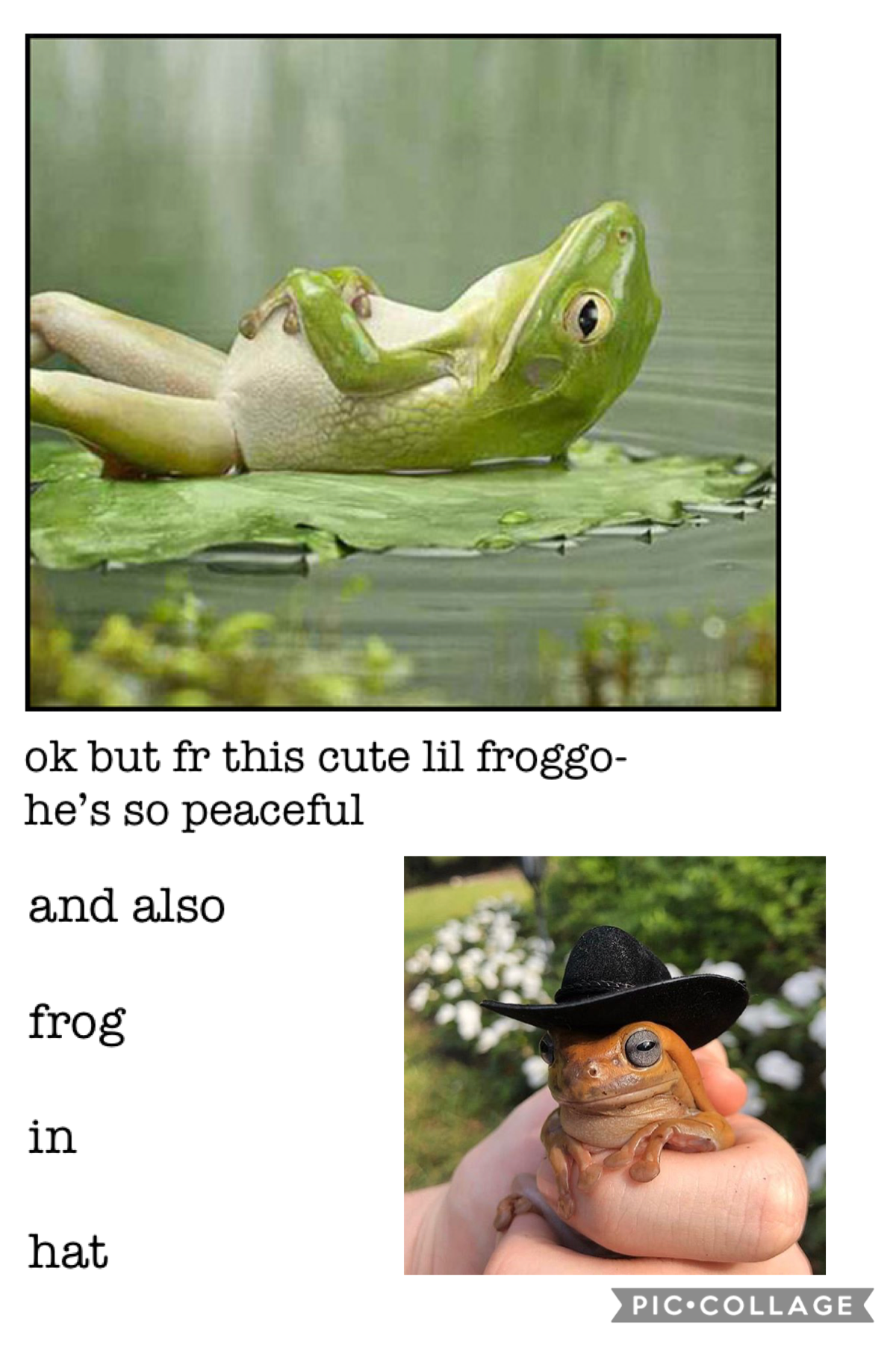 ASHGAHGSHAGSGHAGA I LOVE FROGGOS