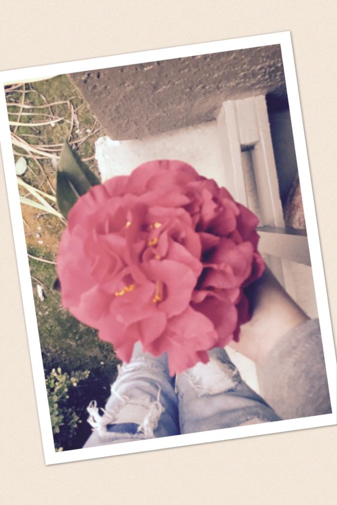🌹 Rose