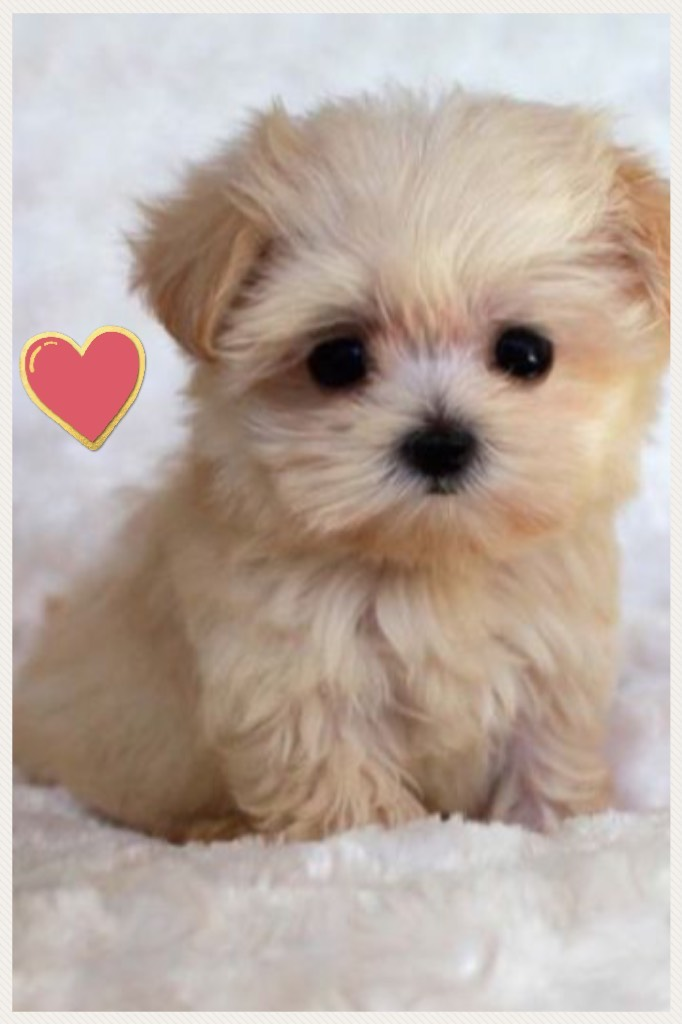This puppy is so cute!