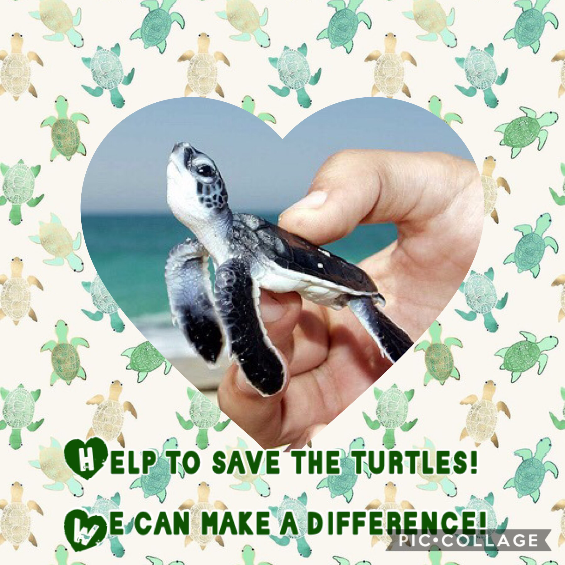 Please share this pic collage with other people to help save turtles 🐢!! Comment down below what you favorite animal is and like this pic collage!!