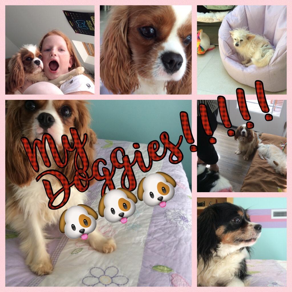 My Doggies!!!!!🐶🐶🐶