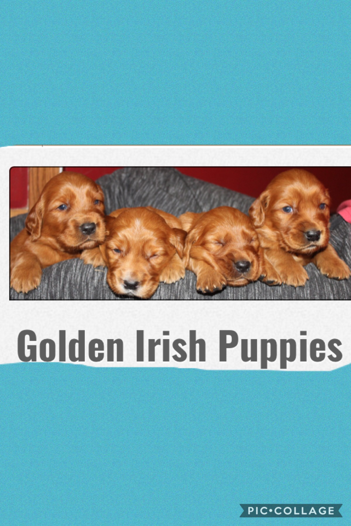 I'm so happy I'm getting one of these puppy's!!!!!
