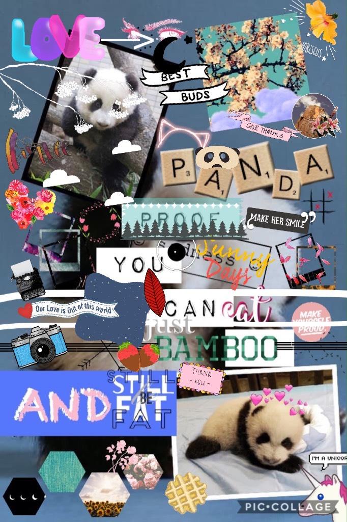 Panda 🐼 Funny Quote