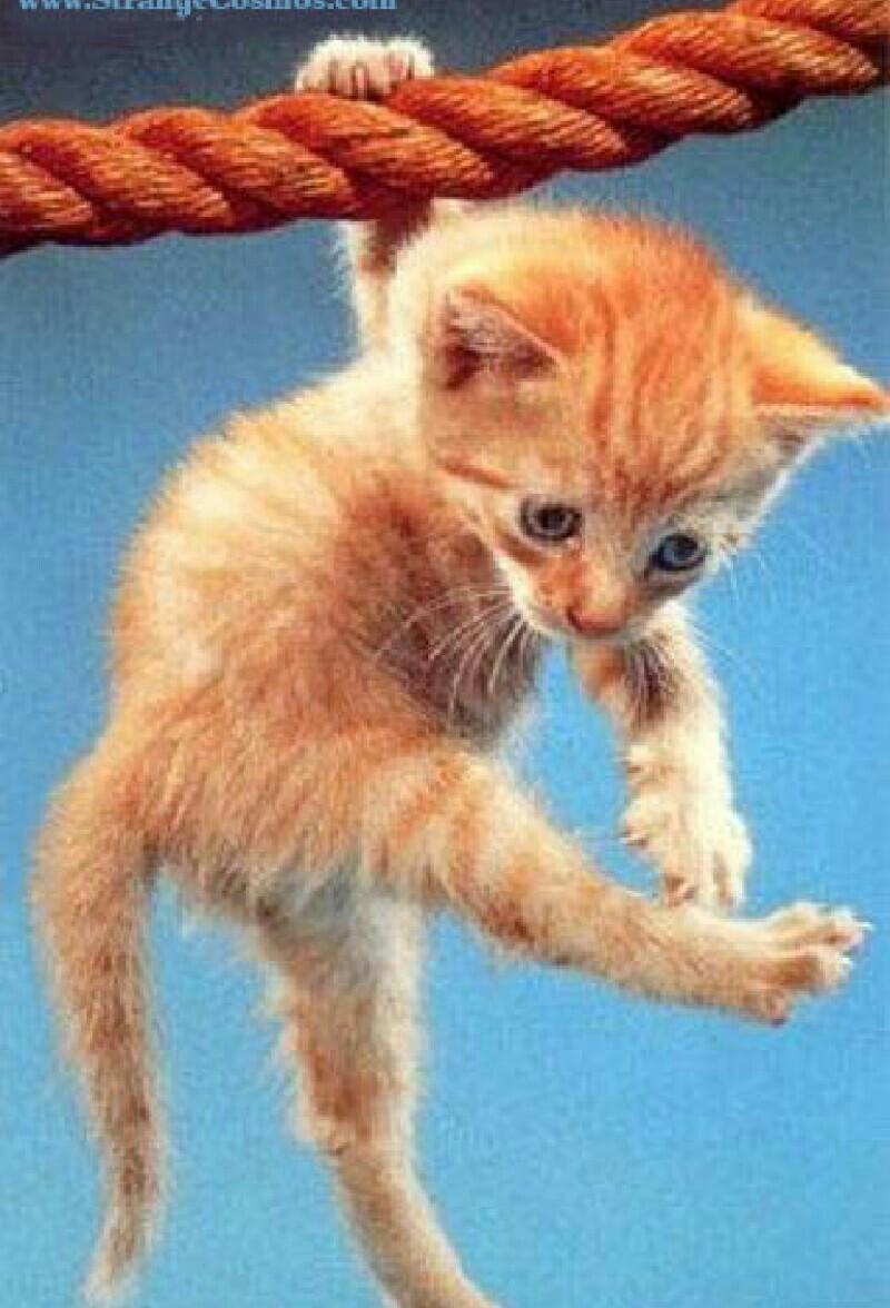 Держись картинки прикольные котики, анимация спасибо все