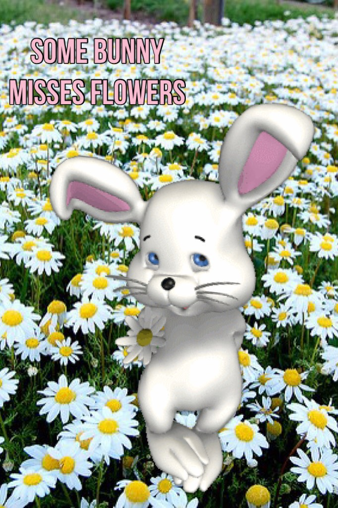 Somebunny misses flowers
