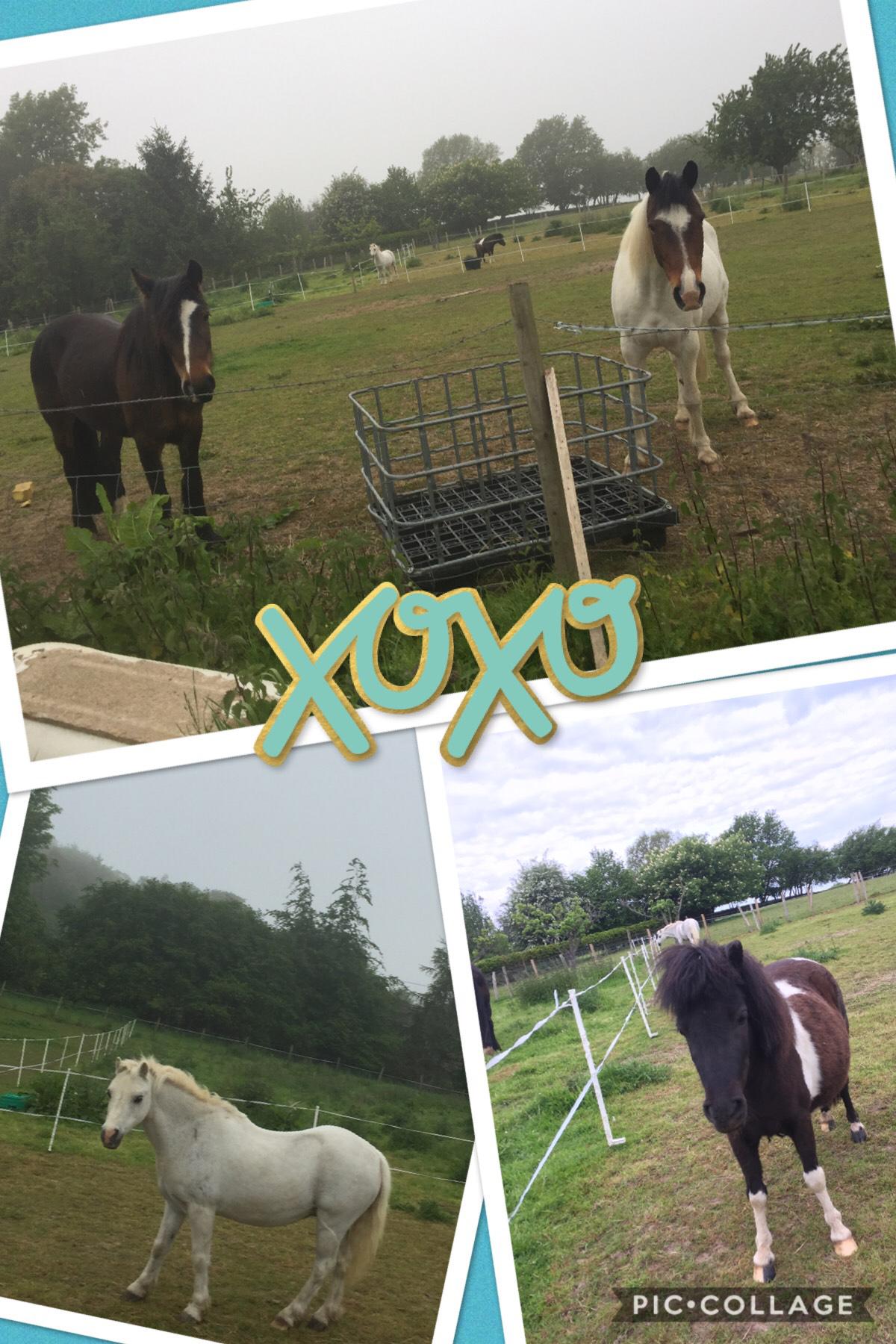 # ponies 4 life ❤️❤️❤️