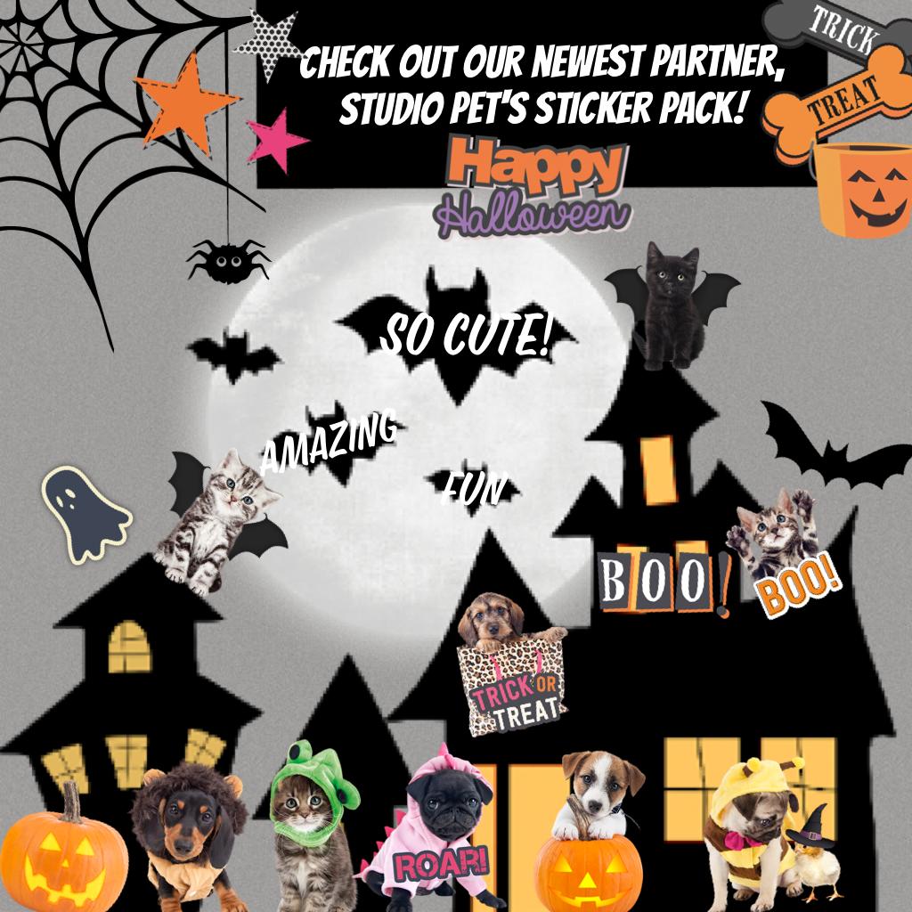 Studio Pets Halloween!