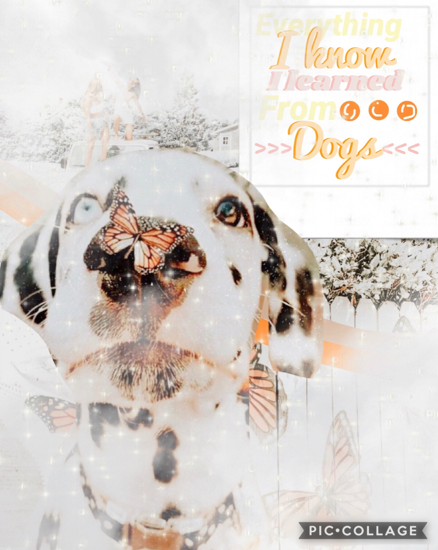 4/28/20 I always do people😆 so here's a dog themed collage!!:)