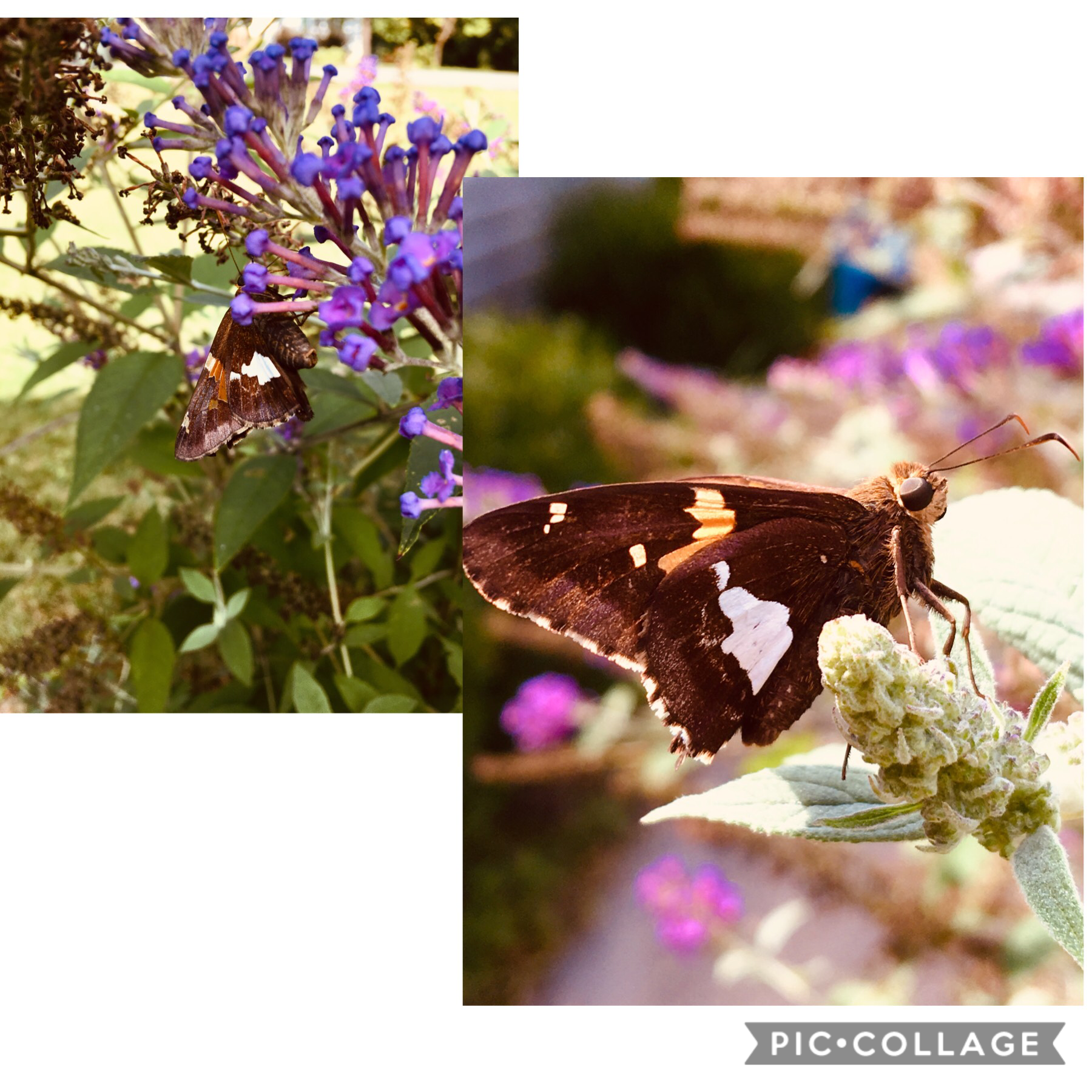 Tap   I took these pictures of a butterfly on my moms iPhone.     I would say they look pretty good 🦋