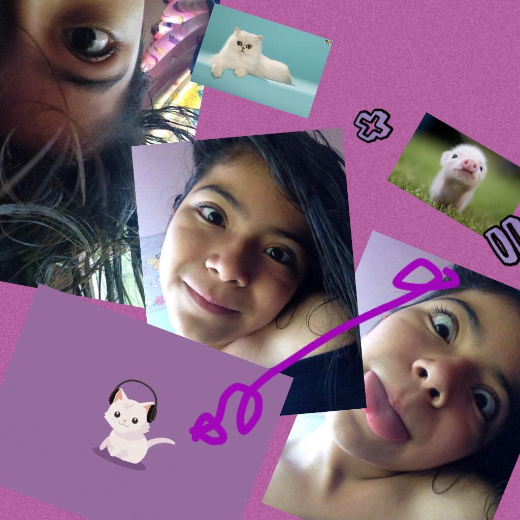 CAT +pig =CAT _pig44