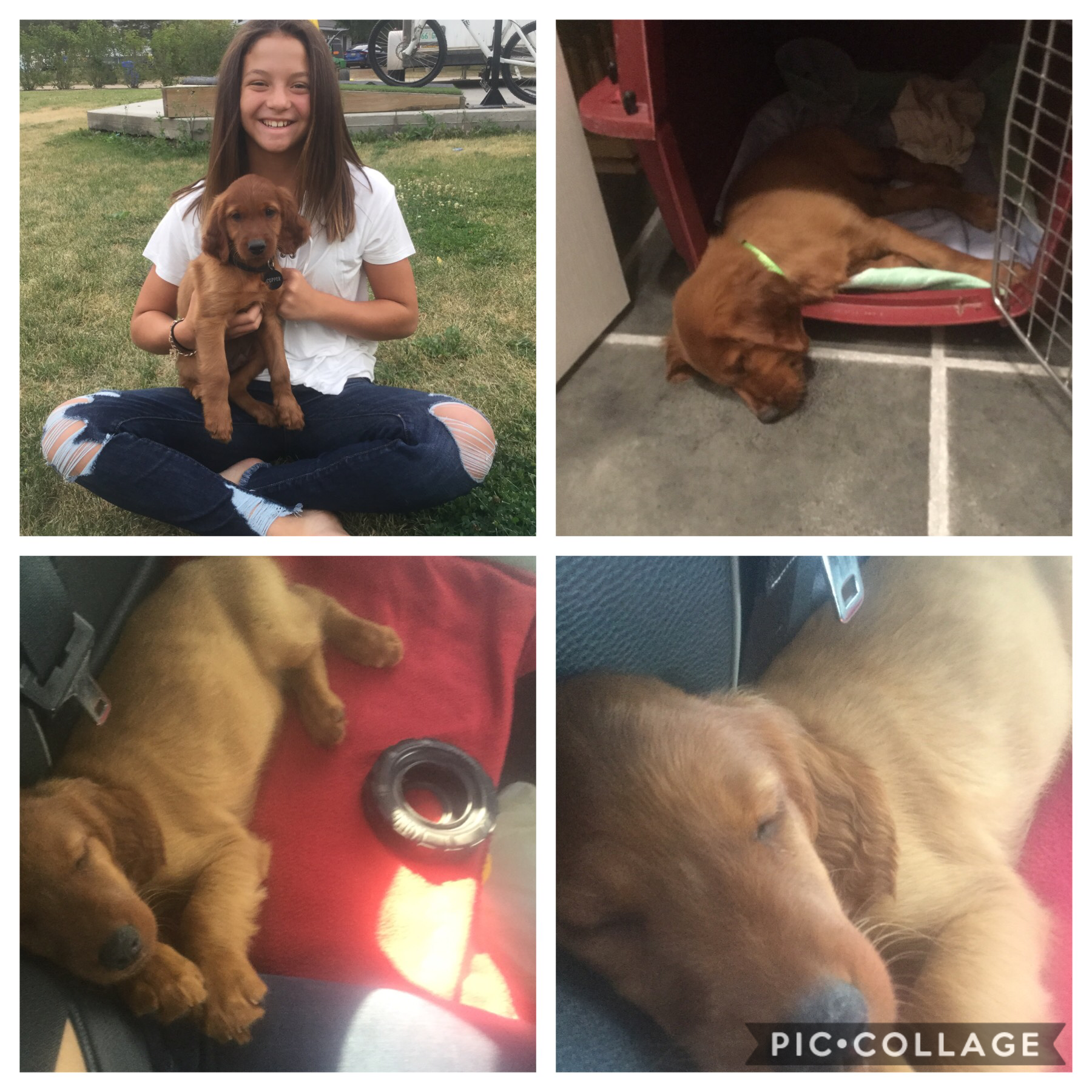 My favourite brother❤️❤️ love my new puppy his name is copper!!❤️