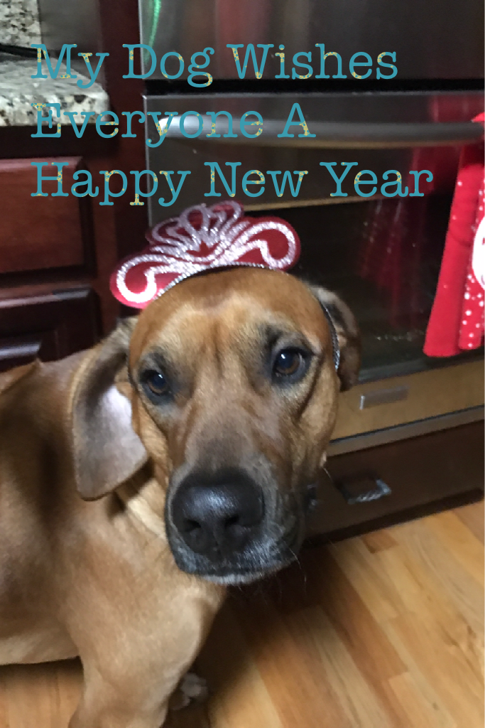My Dog Wishes Everyone A Happy New Year 😝2017!!