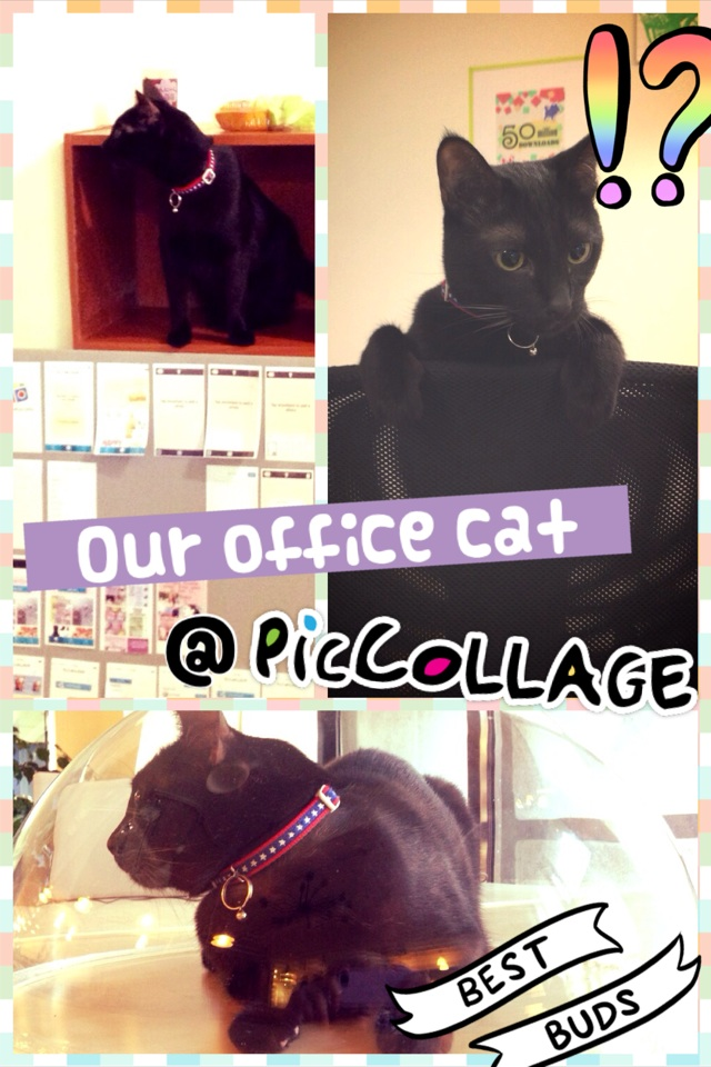 Obama the cat in Pic Collage office :)