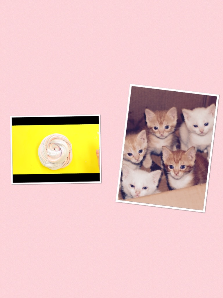 I love slime &kittens