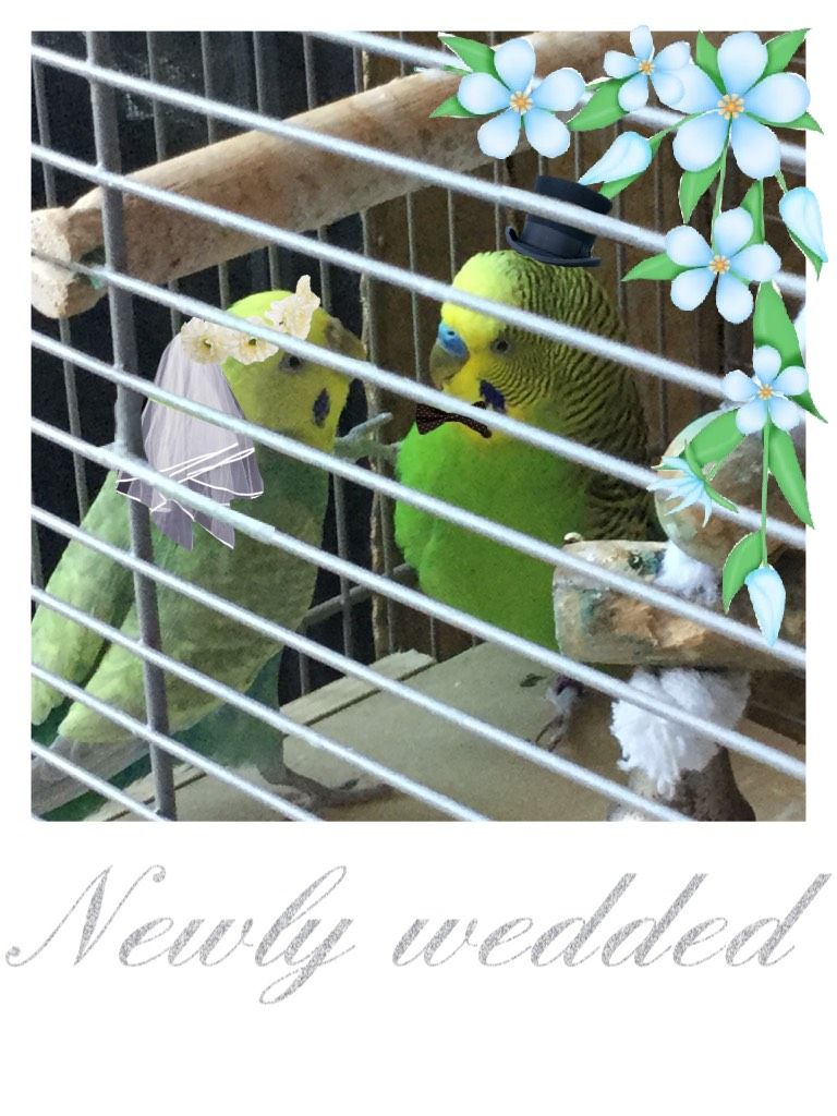 Newly wedded parakeets!