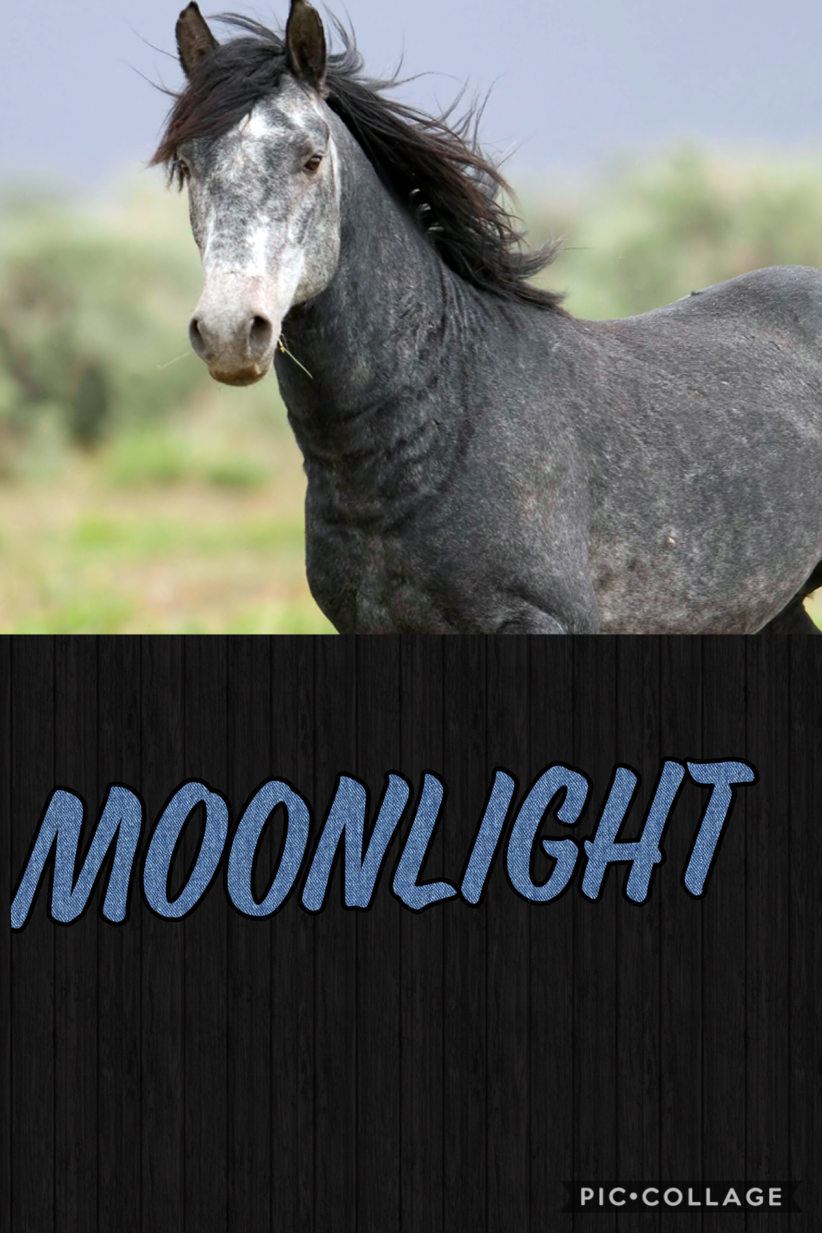 My sisters horse Moonlight