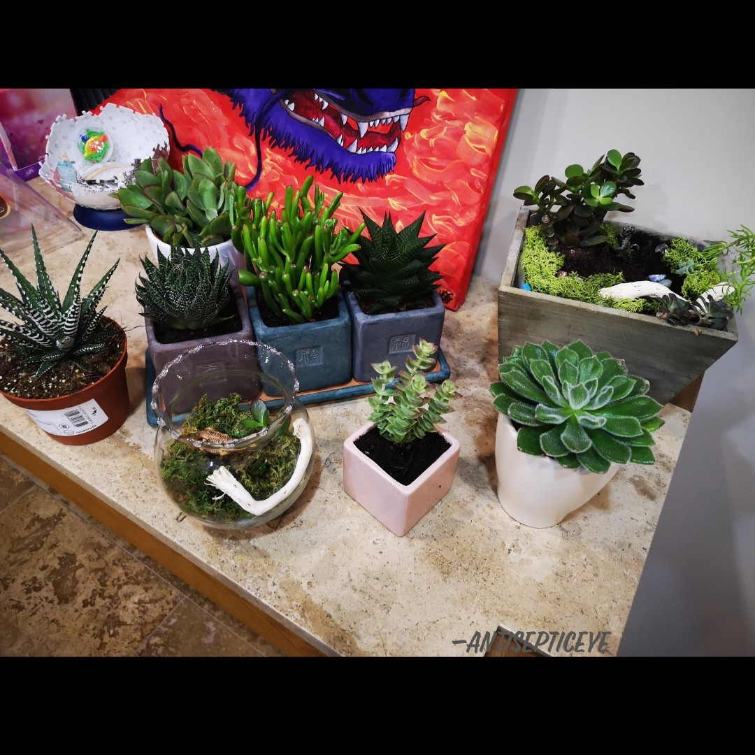 I've been taking massive interest in plants (succulents, bonsai...). It's become a hobby of mine as a stress-relief type of thing.