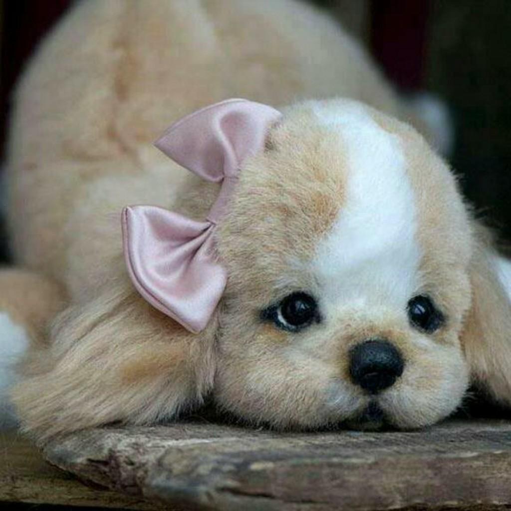 является мимимишные фото собак интересно, что