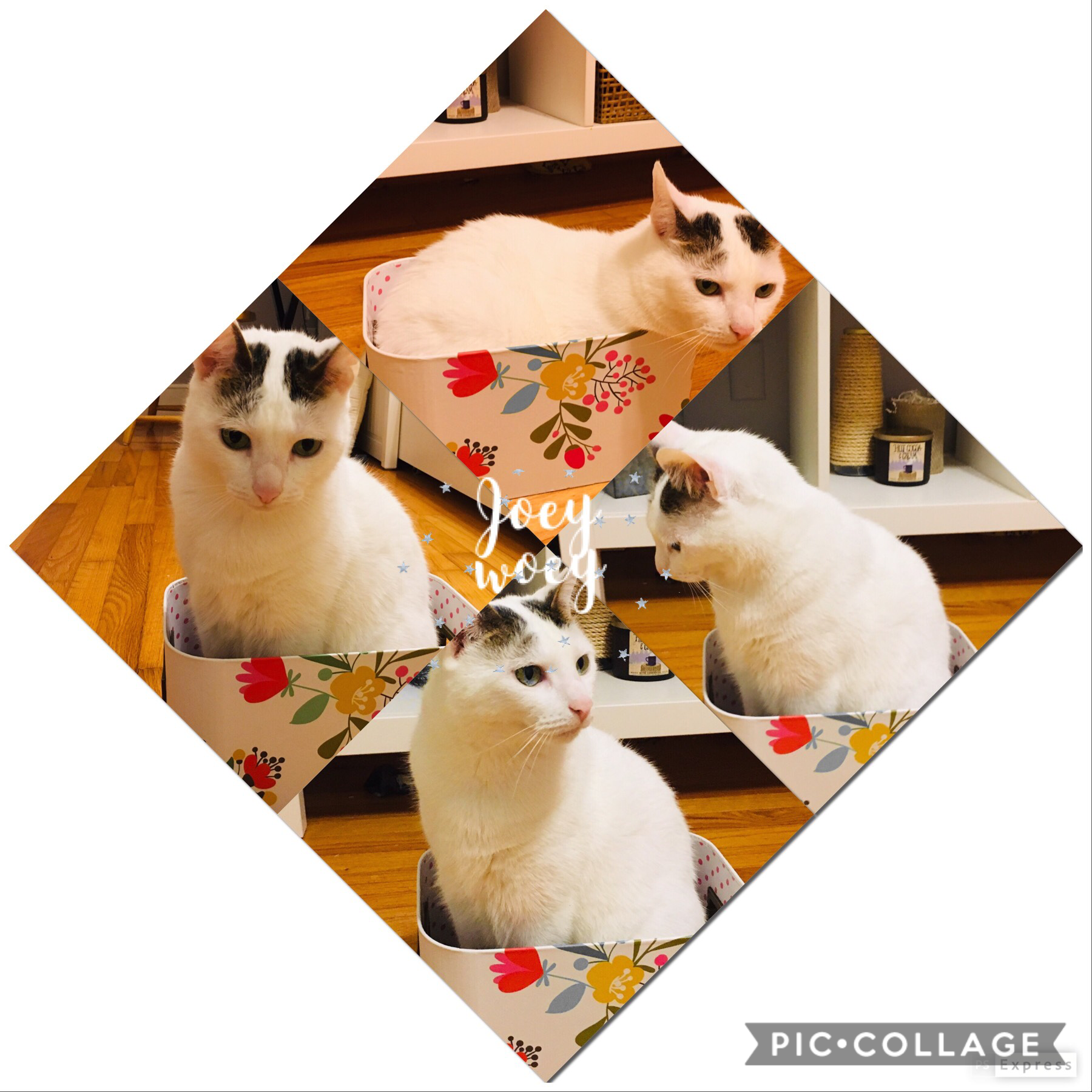 This is my cats YouTube channel- Joey the cute cat Woey