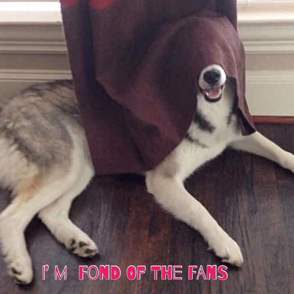 I can't see this dog