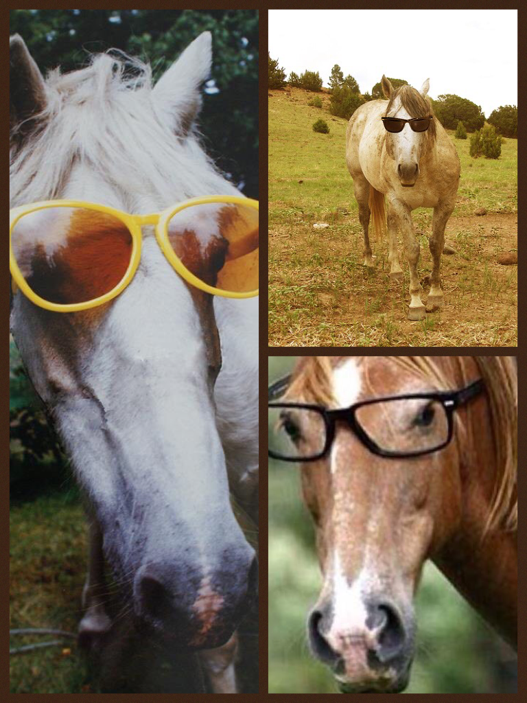 Funniest thing is horses wearing glasses 😂😂😂😂😂😂😂😂😂😂😂😂😂😂😂😂😂😂😂😂😂😂😂😂😂😂😂😂😂😂😂😂😂😂😂😂😂😂😂😂😂😂😂😂😂😂😂😂😂😂😂😂😂😂😂😂😂😂😂😂😂😂😂😂😂😂😂😂😂😂😂😂😂😂😂😂😂😂😂😂😂😂😂😂😂😂😂😂😂😂😂😂😂😂😂😂😂😂😂😂😂😂😂😂😂😂😂😂😂😂😂😂😂😂😂😂😂😂😂😂😂😂😂😂😂😂...