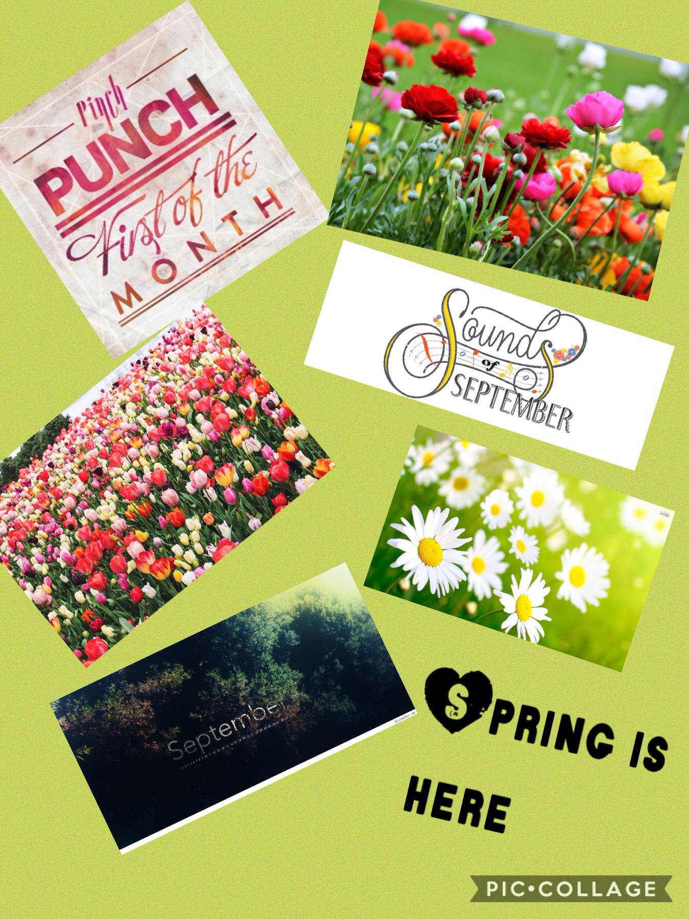 Spring Spring Spring. What should I do next?