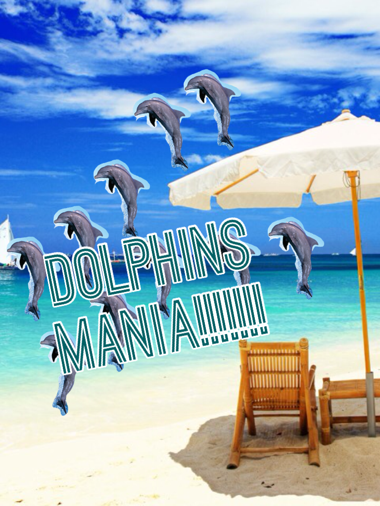 Dolphins mania!!!!!!!