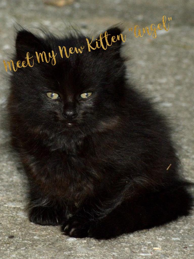 "Meet My New Kitten ""Angel"""