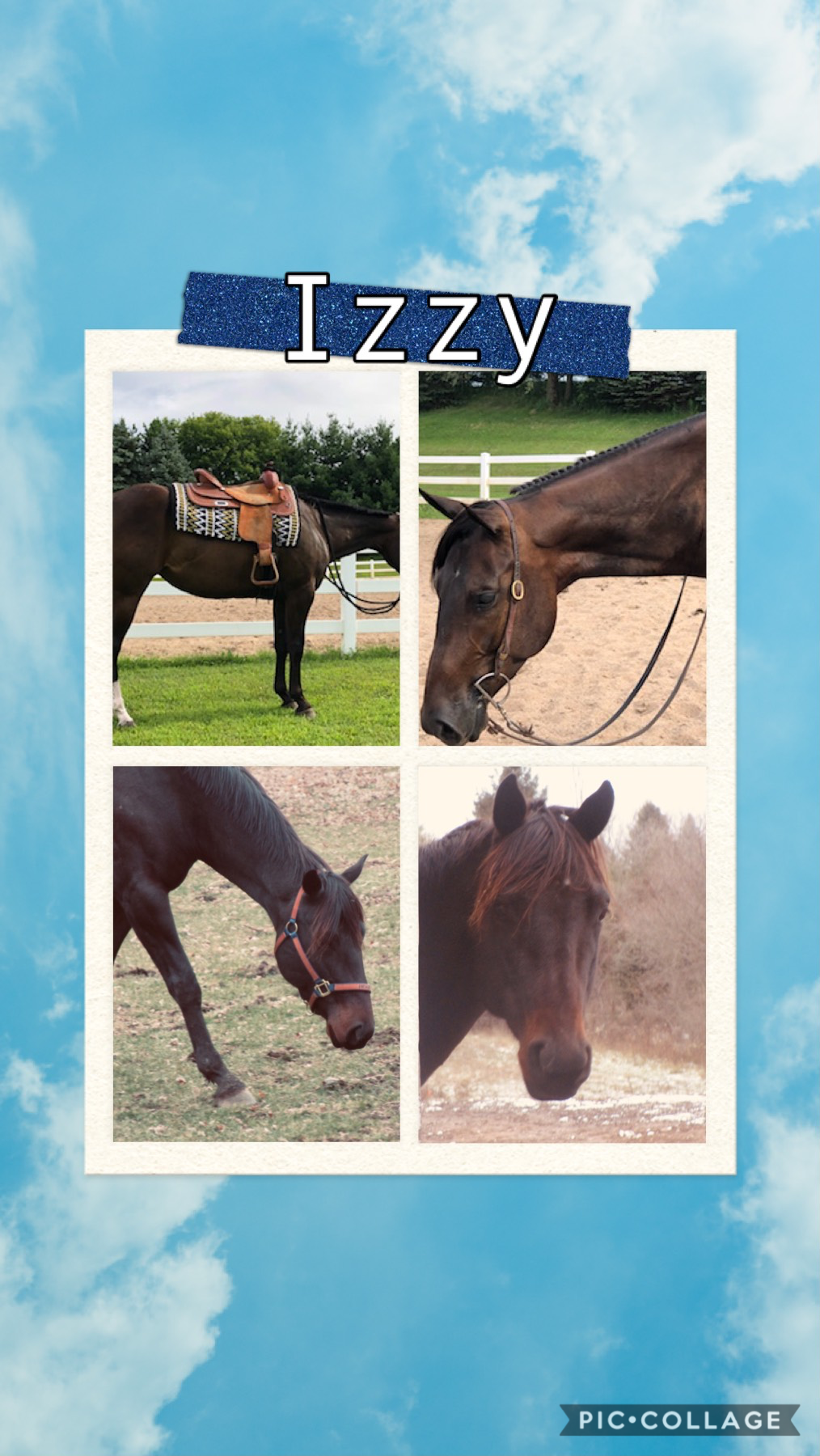 Izzy used to be my Dad's show mare but then we sold her because we got Albert😢 Izzy was a very sweet girl and she loved hanging out with Lucy and Honey