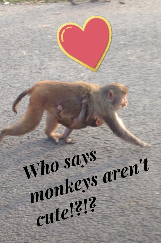 Who says monkeys aren't cute!?!?