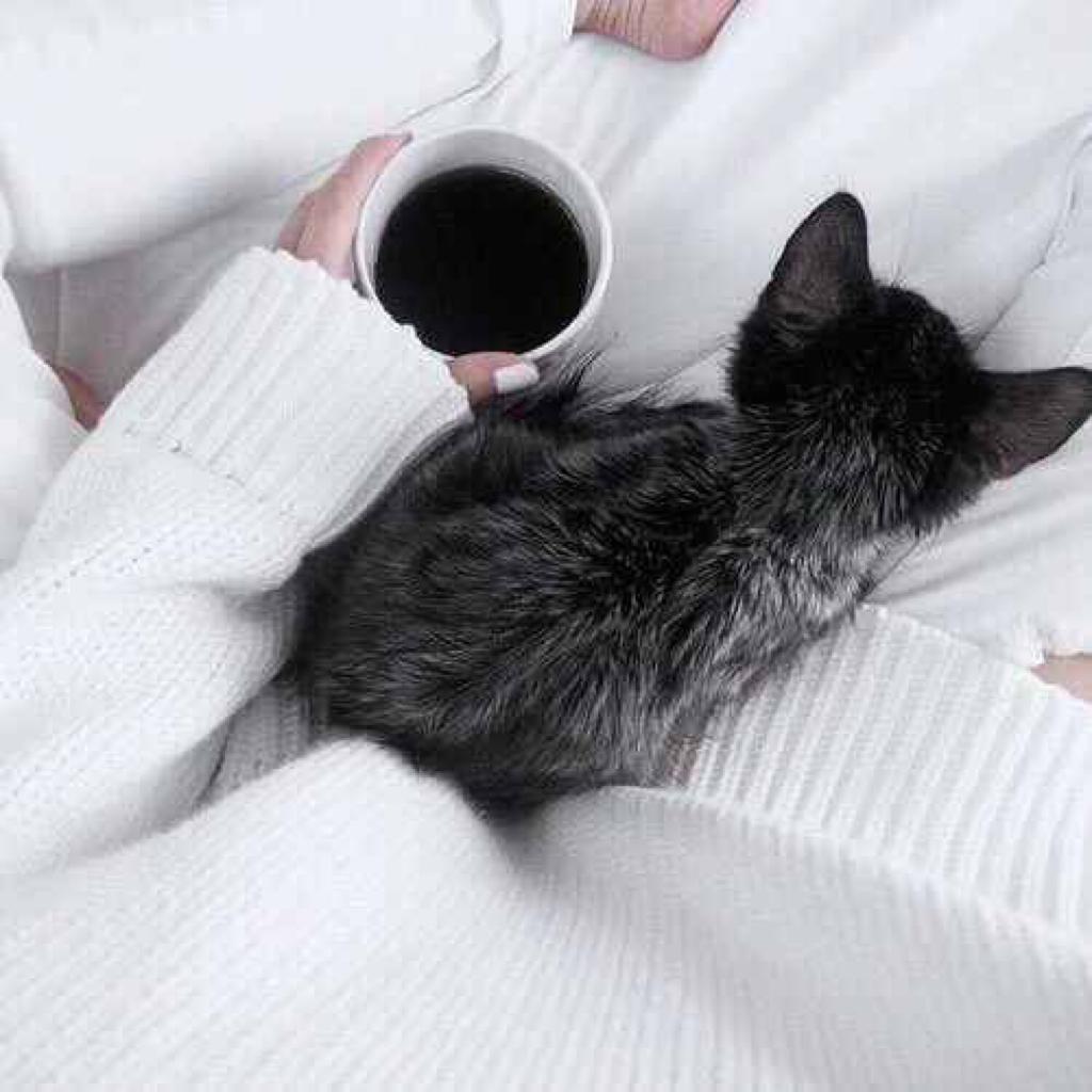 Картинки доброе утро с черной кошкой