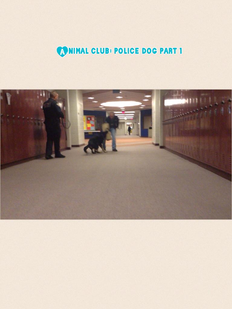 Animal club: police dog part 1
