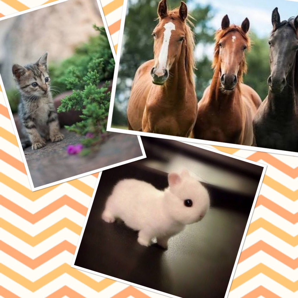 Collage by Amyloveshorses4everandever