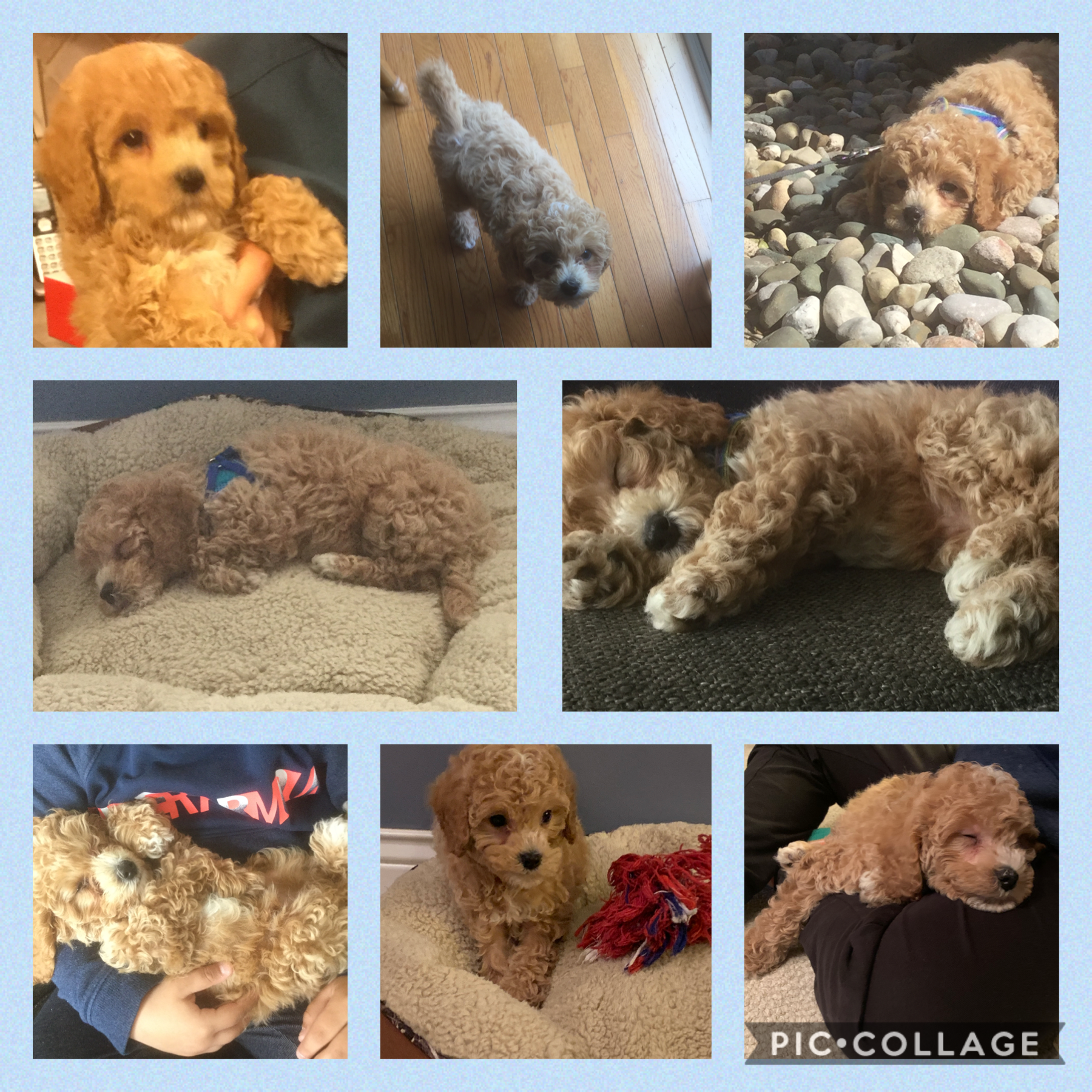my new puppy cooper!