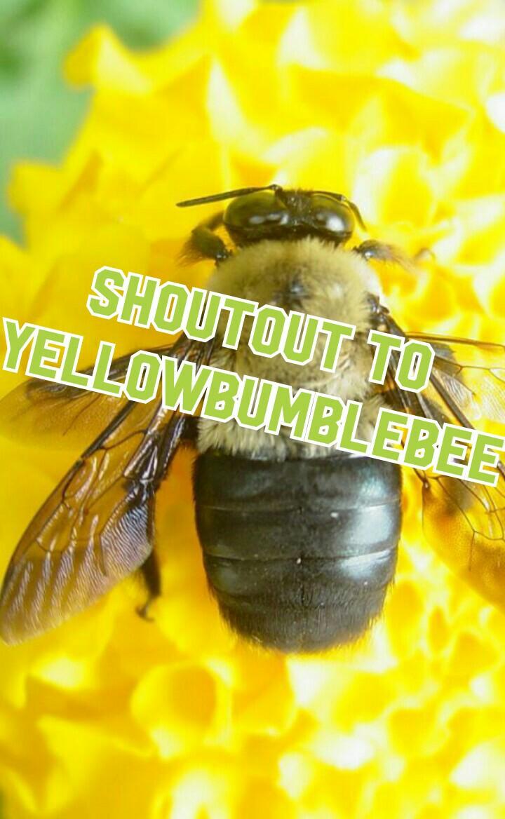 Shoutout to  YELLOWBUMBLEBEE