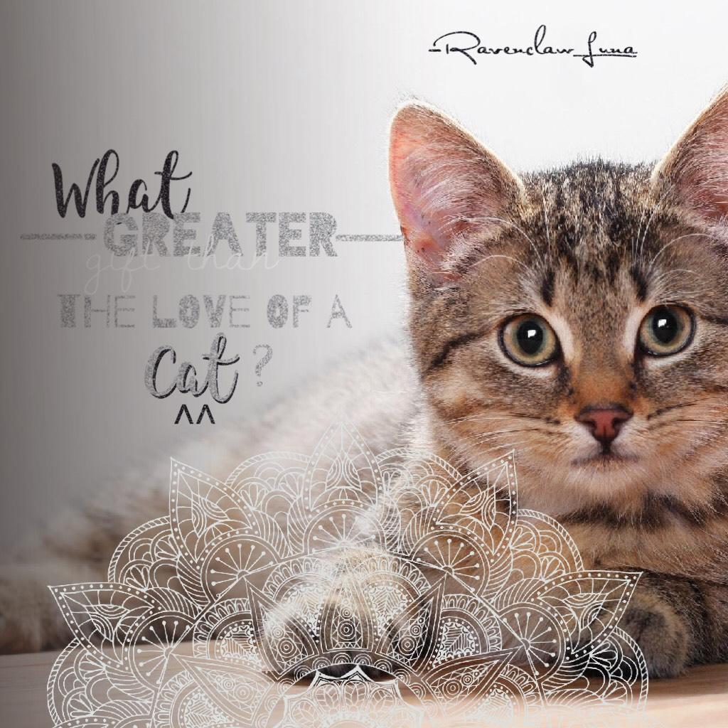 💕Tap💕      QOTD: Do you love cats? AOTD: YASSSSSSS❤️❤️❤️