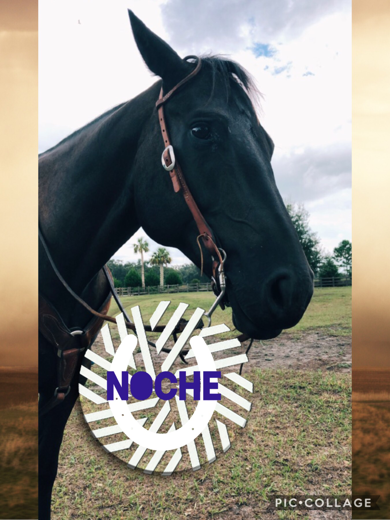 My other horse Noche
