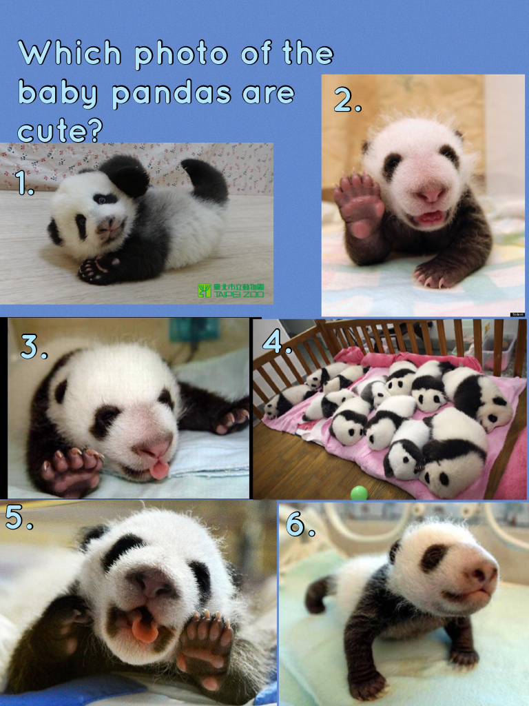 Which photo of the baby pandas are cute?