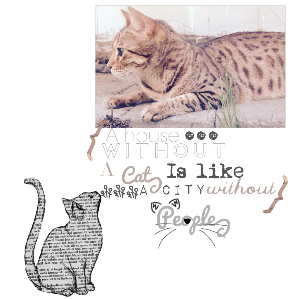 Another cat edit